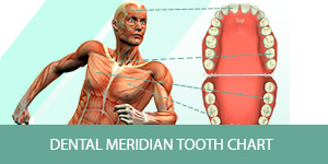 Dentist Centerville - Meridian Tooth Chart